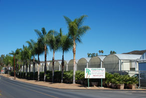 Contact Foothill Tropicals, Inc  - San Diego County, San