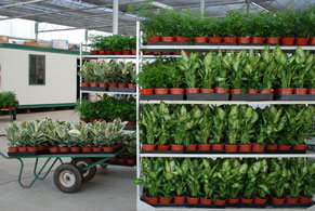 plants before shipping
