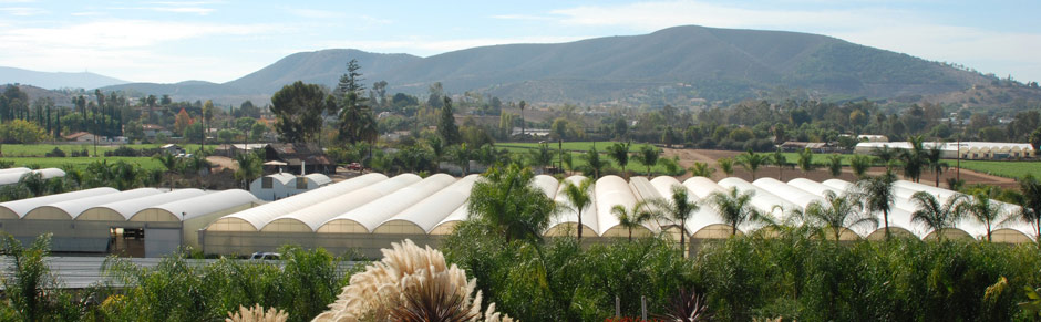 Foothill Tropicals Nursery