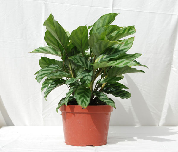 indoor tropical plant identification Quotes