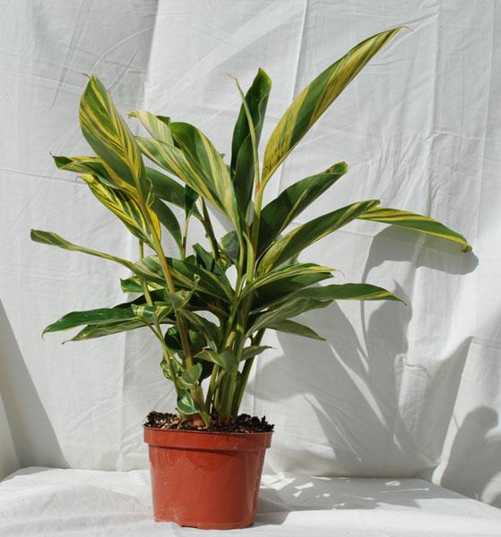 28 Indoor House Plants House Plants 171 Pentacles