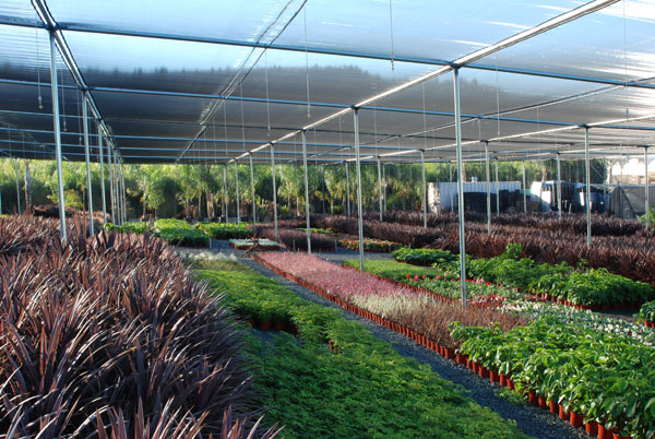 foothill tropicals, inc.  growers of shadehouse tropical plants, Natural flower